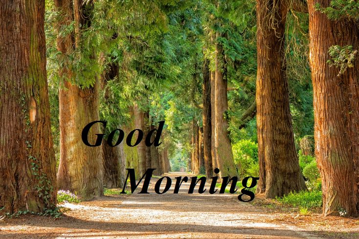 Beautiful Good Morning Photo with Nature